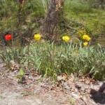 spring_05_03