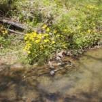 spring_05_04