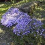 spring_05_10