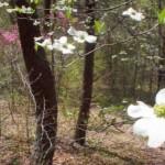 spring_05_13