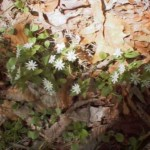 spring_05_15